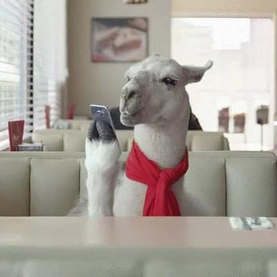 Llama Popularity